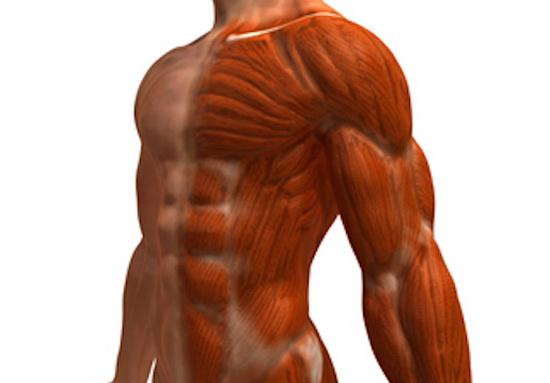 болят мышцы после первой тренировки