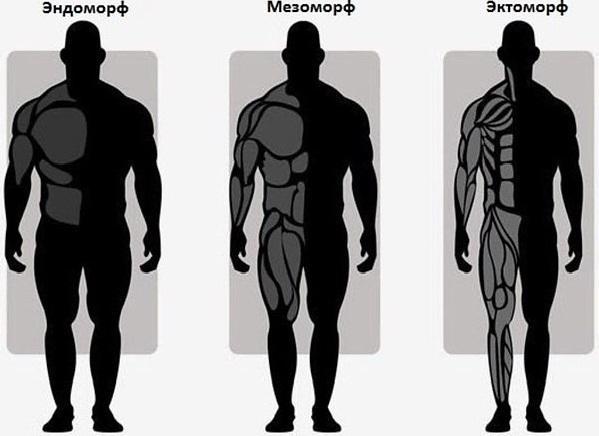Питание по типу телосложения рекомендации