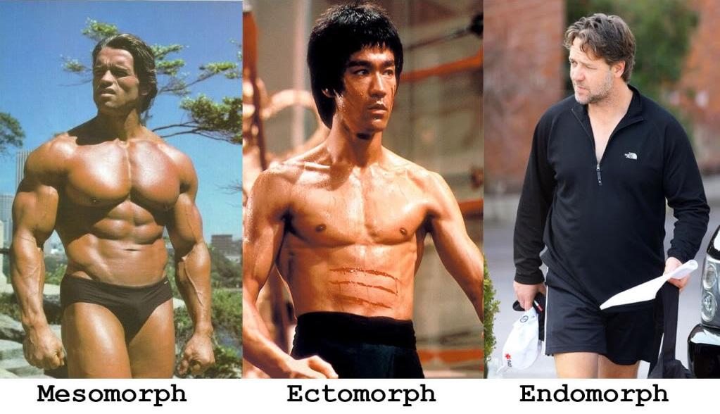 Как определить, кто ты - эндоморф, эктоморф или мезоморф